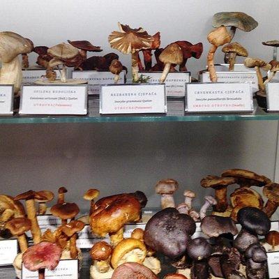 Mushrooom Museum