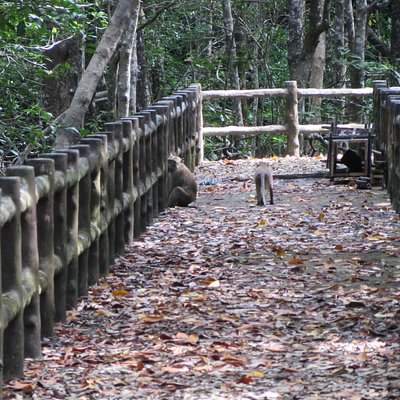 Auf Holzstegen durch den Mangrovenwald