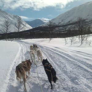 Enjoy the mountains, nature and learn about how it is to dogg sledding..