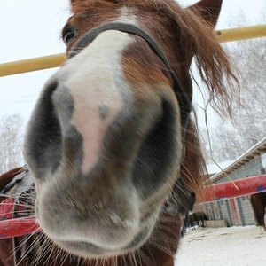 Это лошадь))