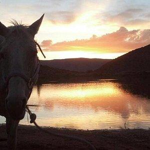 Missy at sunset