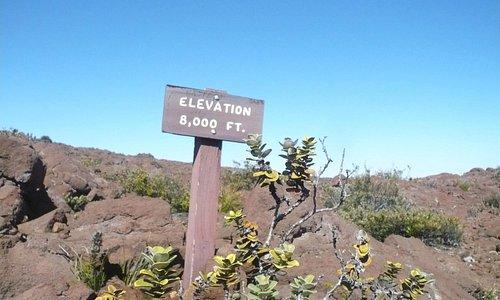 Elevation: 8000 ft.