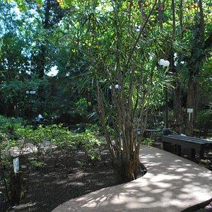 andadores del jardín botánico