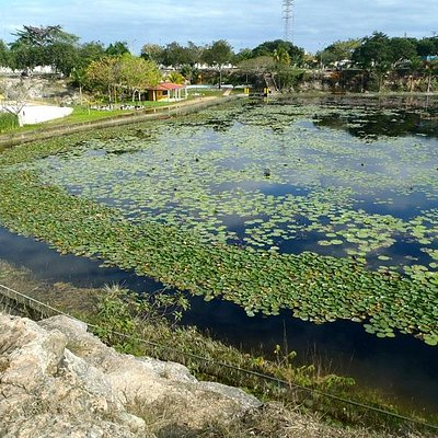 Water lilies: Acuaparque