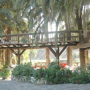 wwwcamelsafarigrancanaria.com