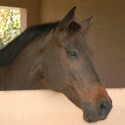 Meet are beautiful horses