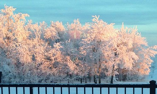 A beautiful view of the hoar frost