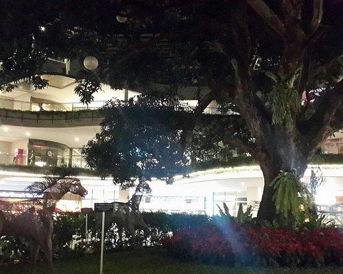 The FT's Tree