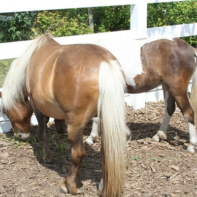 Mini ponies are so cute!