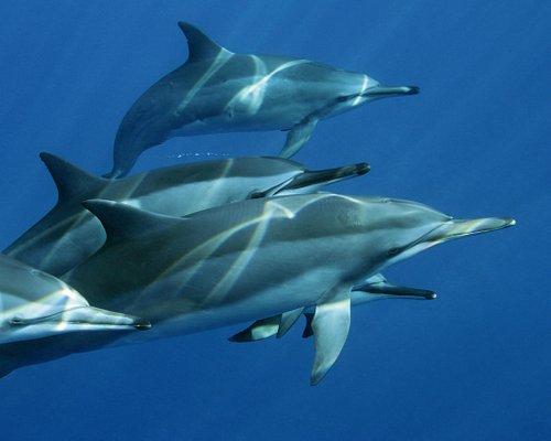 Dolphin Swim Kona swim with dolphins Hawaii join Liquid Hawaii Ocean Charters LiquidHawaii.com