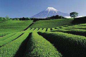 Mt Fuji and tea plantations