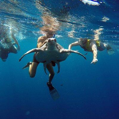 Nadamos con tortugas