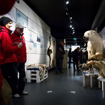 The selection of arctic stuffed animals of the Arctic.