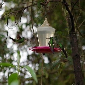 Kolibri zum Filme füllen