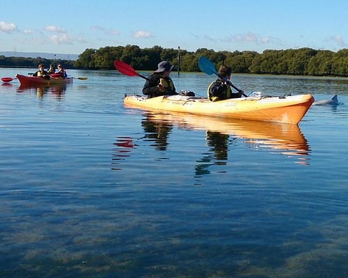 Adelaide Dolphin Sanctuary kayaking