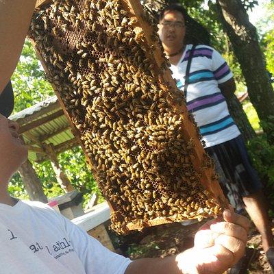 honey at Milea Bee Farm