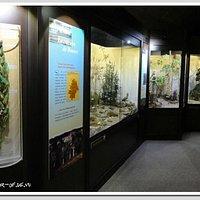 Blois - Muséum d'Histoire Naturelle