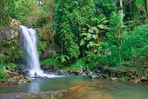 Curtis Falls Waterfall a short stroll away