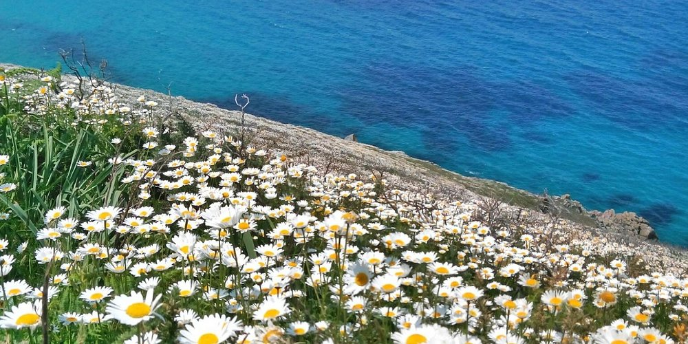 Playa de Moreira ahí abajo en primavera.