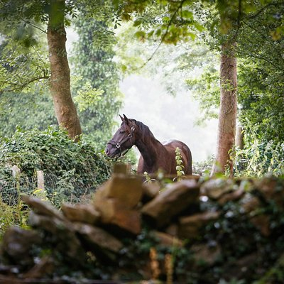 Stunning horses and grounds