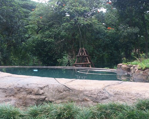 wam rock pool to swim