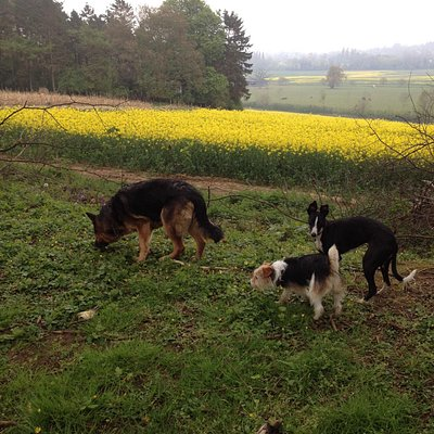 JD, Stella & Tilly walking the Avenue at Shotover
