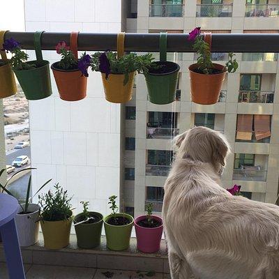 Собака-барабашка из Силикона