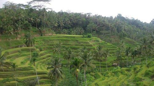 Bali Rice Terrace www.balibetatour.com