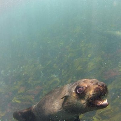 Welcomed by seal
