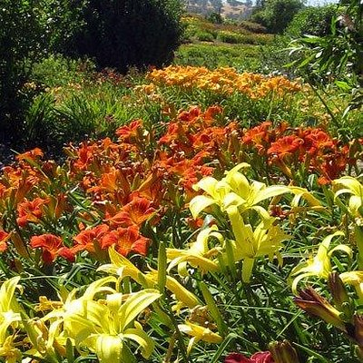 A shot of the beautiful flowers in bloom at Amador Flower Farm.