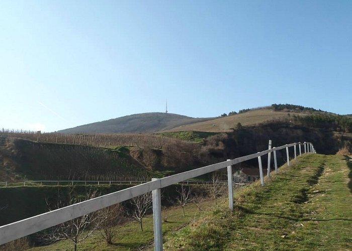 Tokaj hill