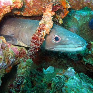 Albufeira Diving at it´s best