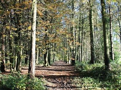 The Pinewoods
