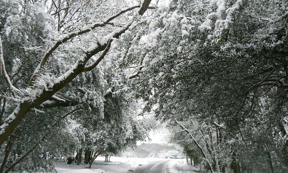Winter wonderland in Hampshire!