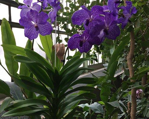 Sublime vanda en fleurs