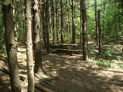 Trails in the woods by area 4