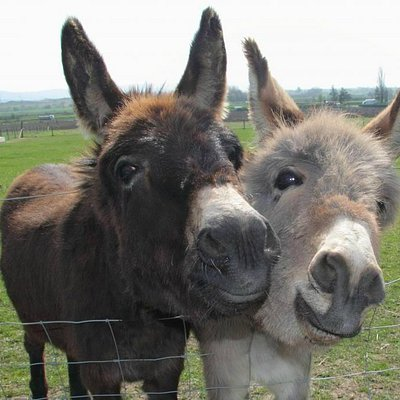 See donkeys and more animals at Over Farm