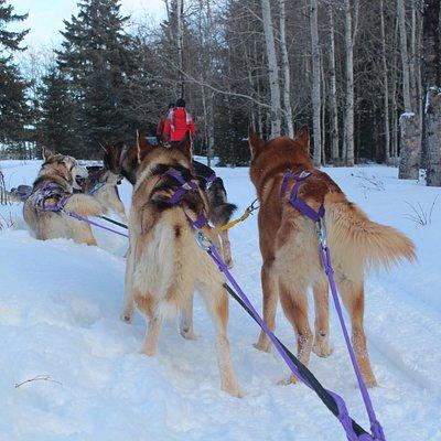 Puppies on the run
