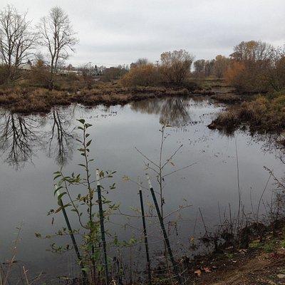 Part of Delta Ponds