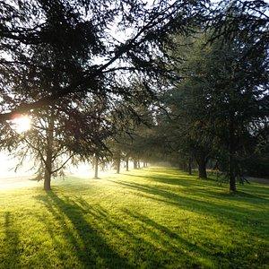 Landscape Arboretum Cimetière parc