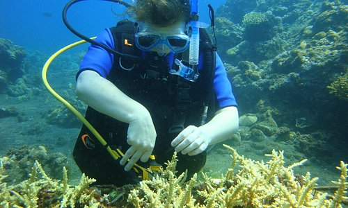 Cutting baby corals for transplanting