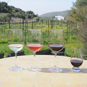 Amphorae Winery