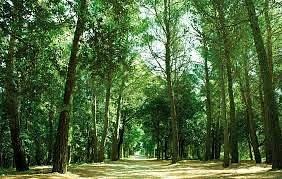 Sentiero principale che porta al punto panoramico/pista di pattinaggio