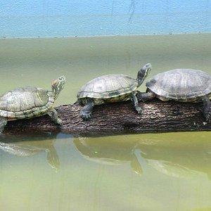 Trilha Ecológica