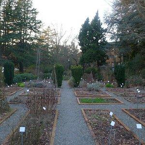 Herb garden in march 2015