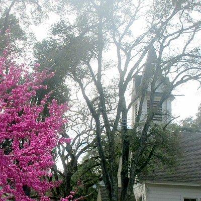 Woodside Library & Native Plant Garden, Woodside, Ca