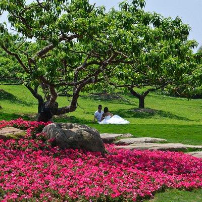 botanic garden chengdu