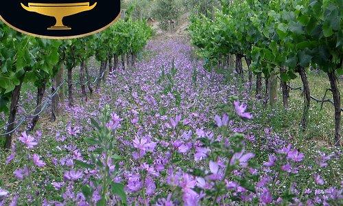 BioGro certified vineyard