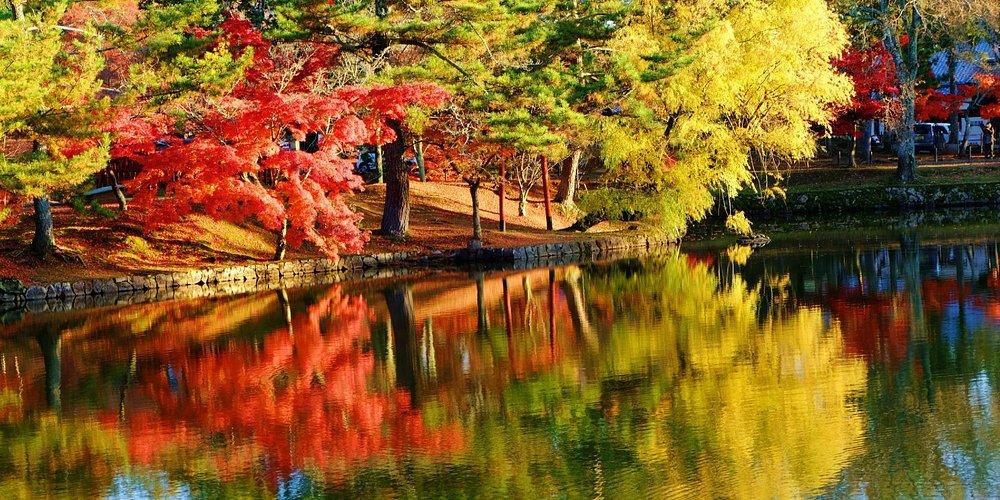 ใบไม้หลากสี สะท้อนในสระขนาดเล็ก