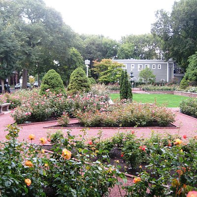 Merrick Rose Garden in bloom